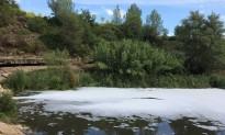 Vés a: VÍDEO | Una tonyina de grans dimensions queda encallada a la platja del Fangar